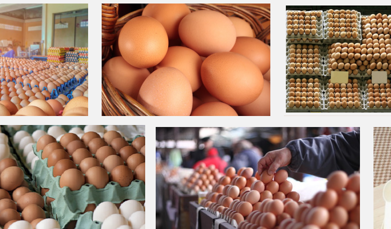 How To Start Eggs Supply Business To Shops In Nigeria